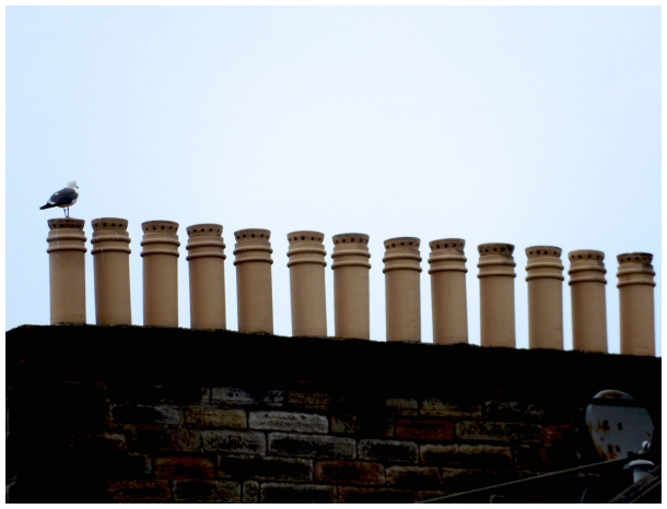 Seagull and chimney pots