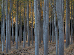 Orderly forest