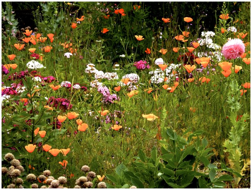 Danish wildflowers