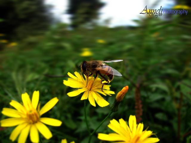 buzzzzz.....