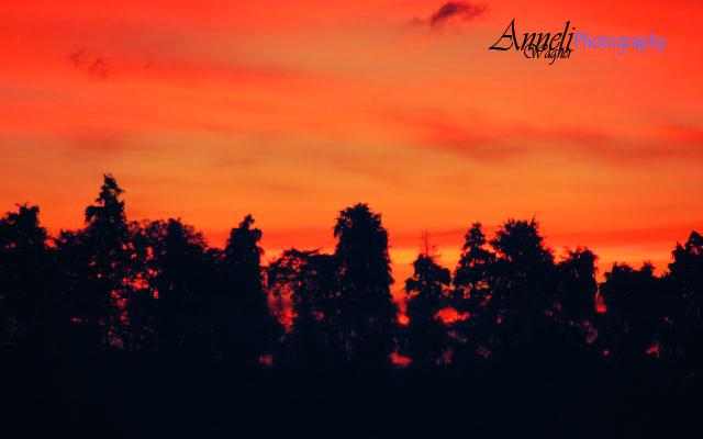 Sunset Close up