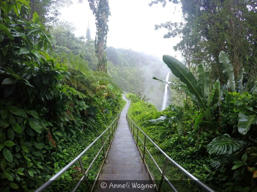Rainforest walk to waterfall