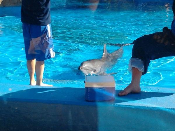 dolphin, ushaka marine world, south africa, durban