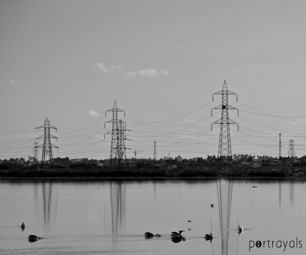 Pallikaranai Marsh in Chennai India