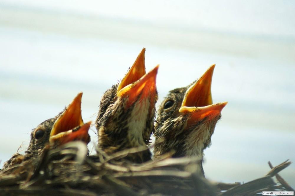sing choir of birds on mom's back porch