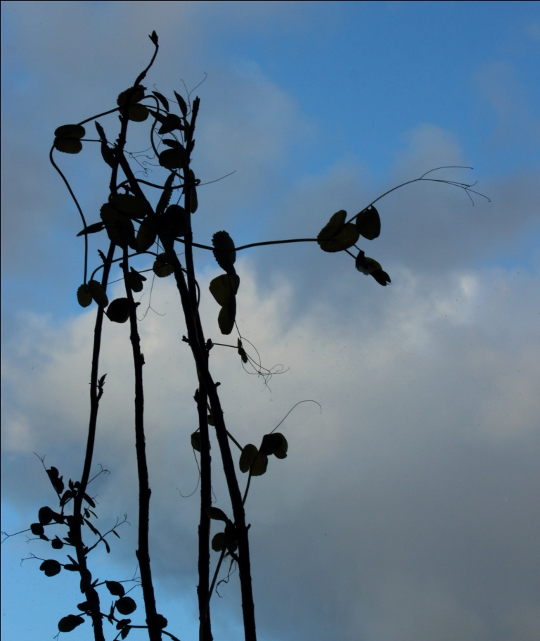 The plant and the blue sky