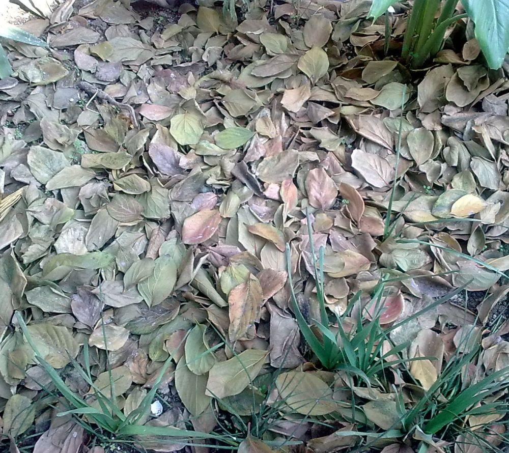 برگ های مرده ی باغچه