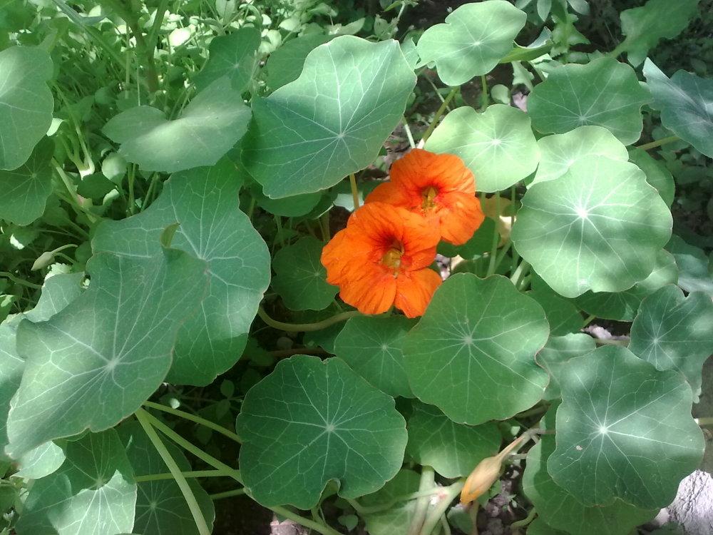 گلهای باغچه