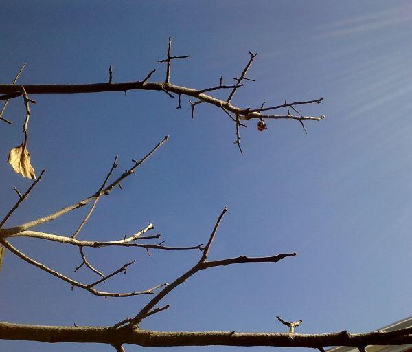 Tree and sun rays