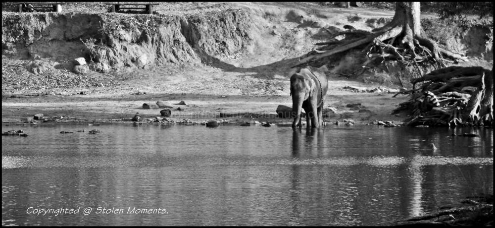 Baby Elephant at Dubare Elephant Camp