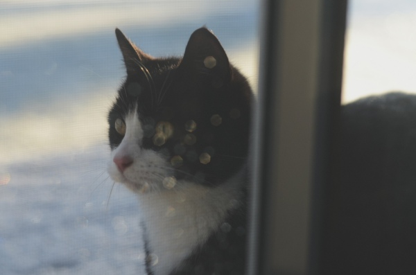 a cat in the snow