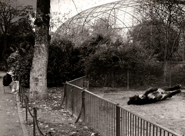 Paris - Jardin des Plantes