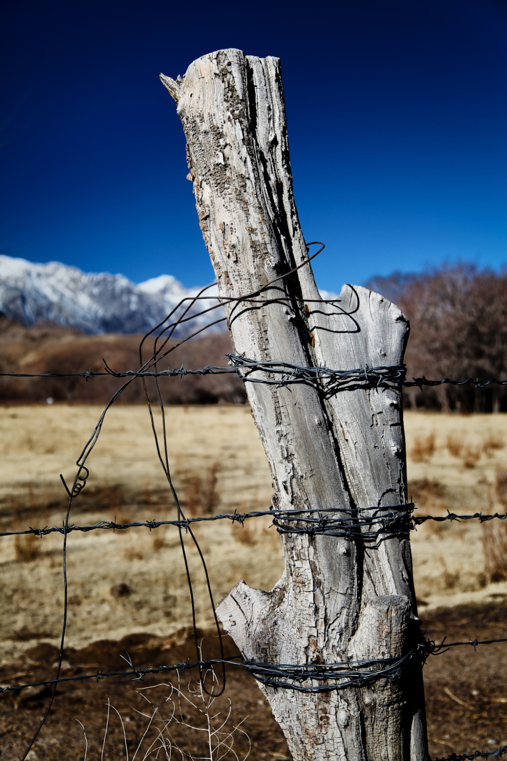 Fence post along highway in Lone Pine, CA