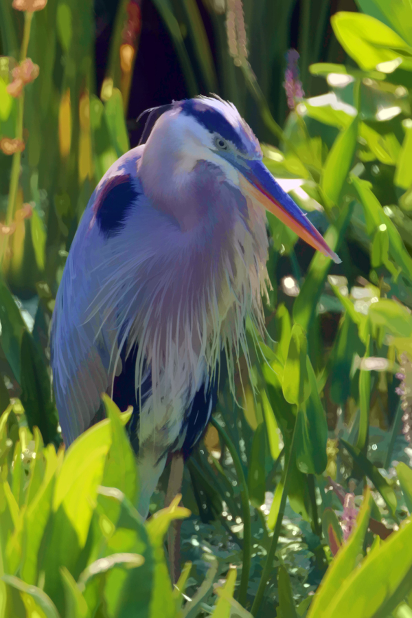 Great Blue Heron enjoying the sunshine