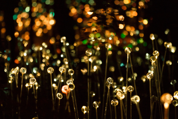 a few of 20,000 lights on path