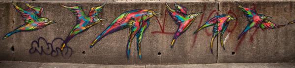 Birds on concrete wall