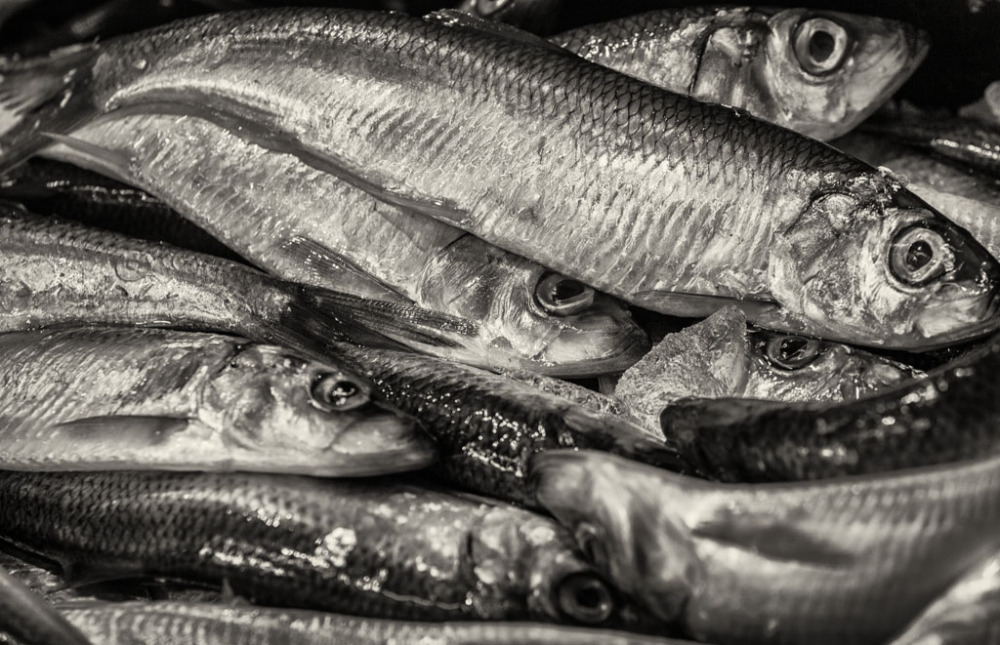 Fish on ice in Italian Market Philly