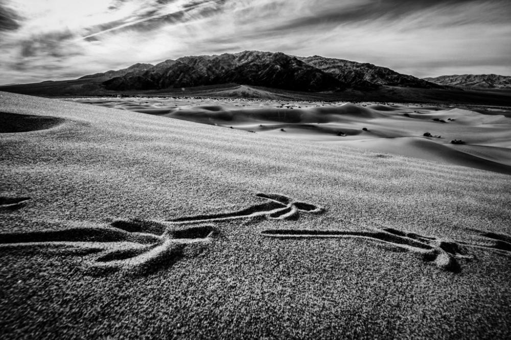 Crow tracks on dunes