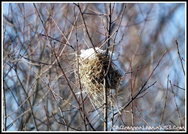 snow capped nest