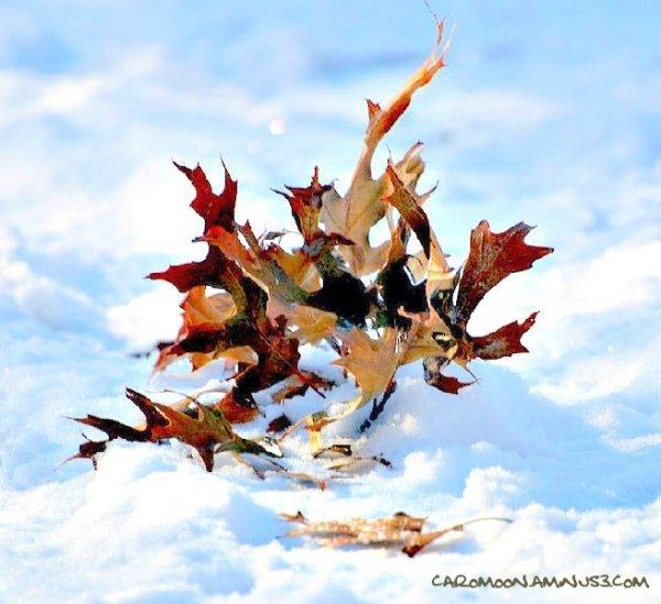 leaves hustle