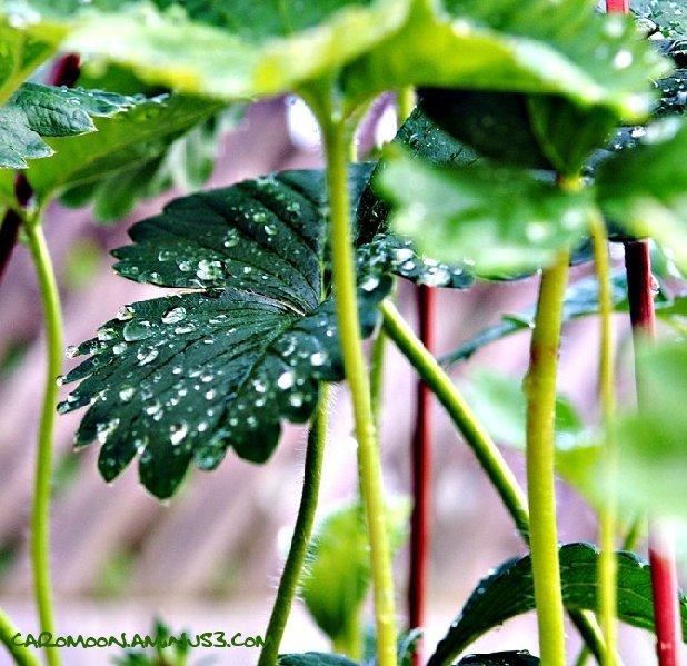 mini rainforest