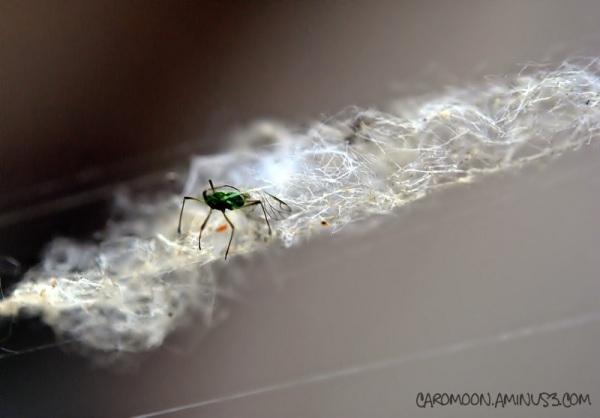 web walker