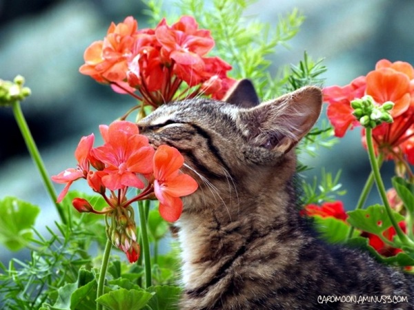 stop & smell the geraniums