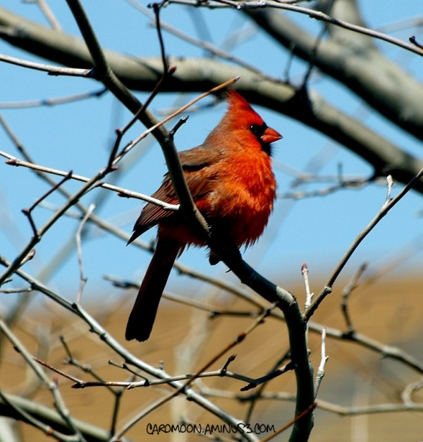bird on a limb