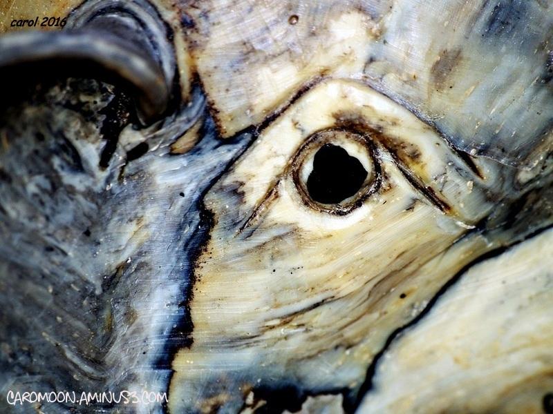 a closer look at shells