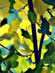 peeking through the leaves