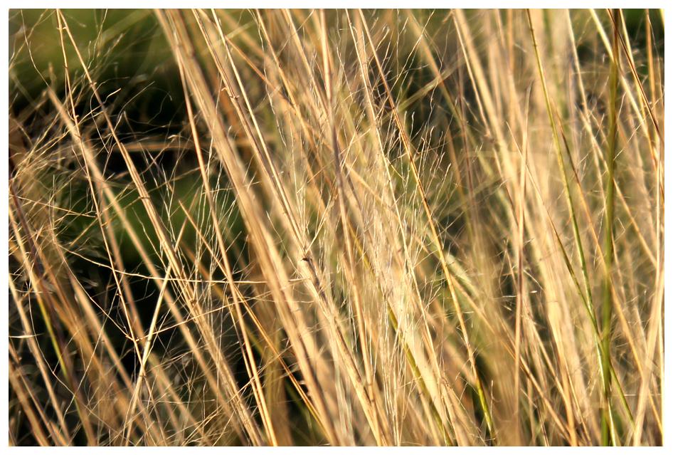 marsh grass 2