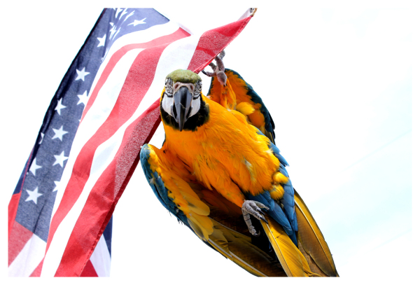 patriotic parrot?