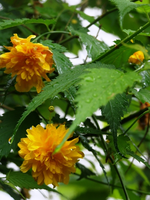 yellow, green and some raindrops