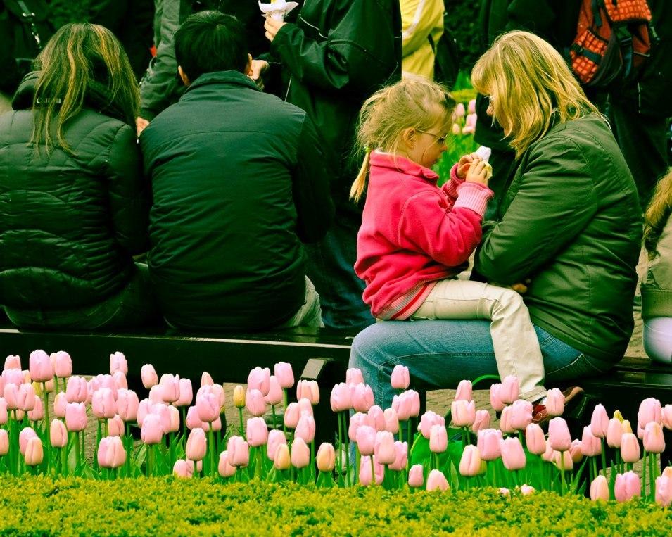 Pink like Tulip