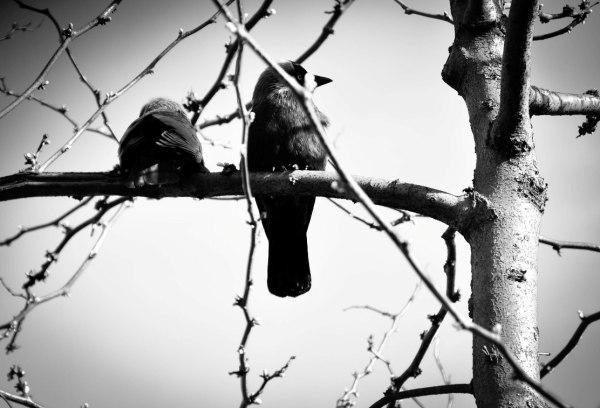 The Silent Gossiper