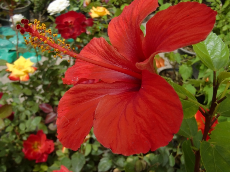 a flower like frog ?????!!!!!!!!!
