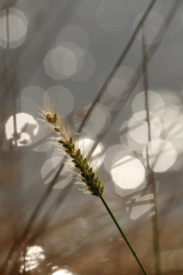 Grass and reeds with bokeh