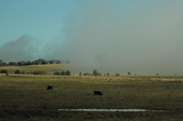 Australian landscape with fog