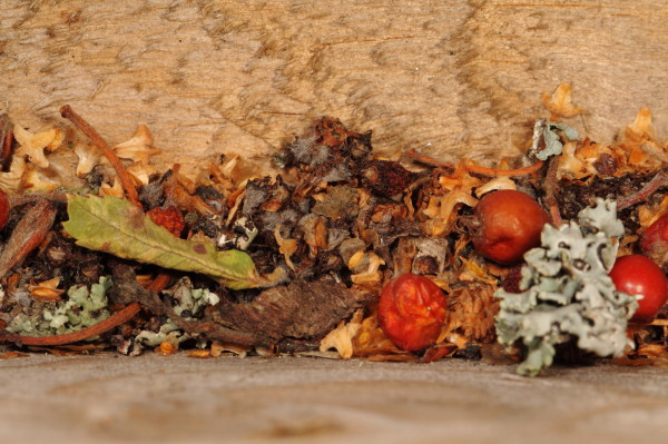 Plant litter abstract