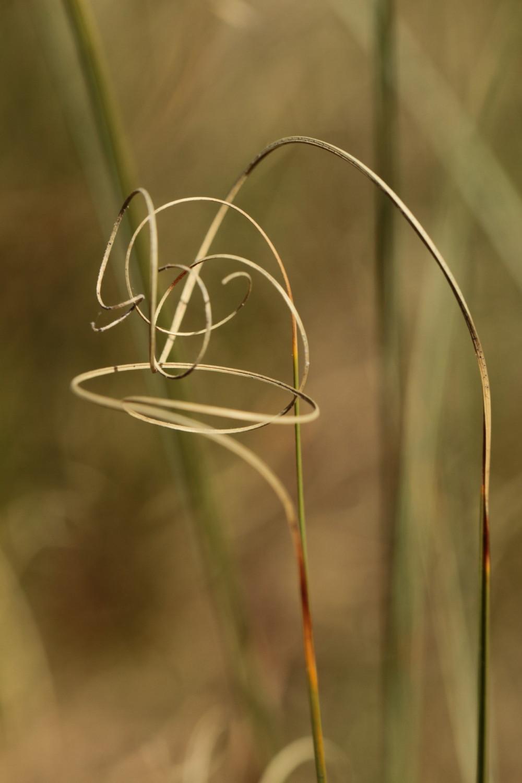 Swirly grass abstract