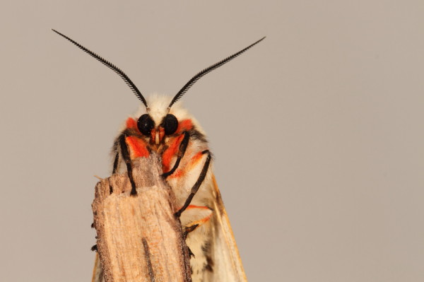 Moth portrait