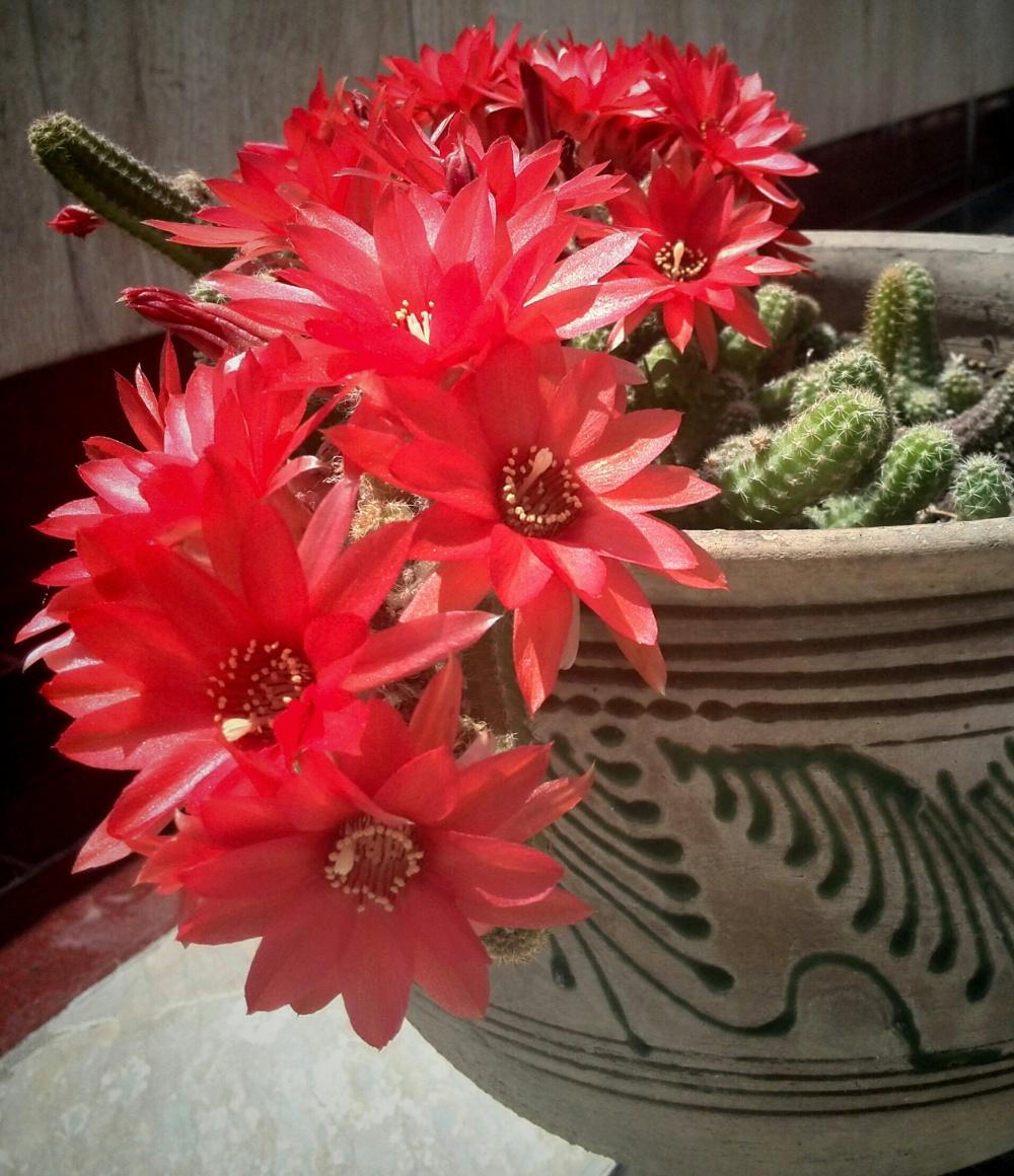 cactus!!