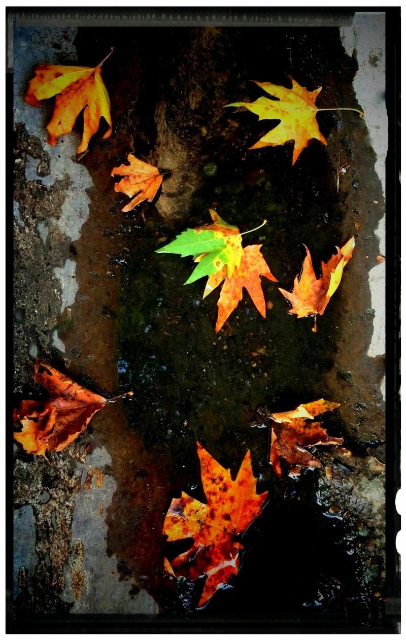 ...بوی پاییز