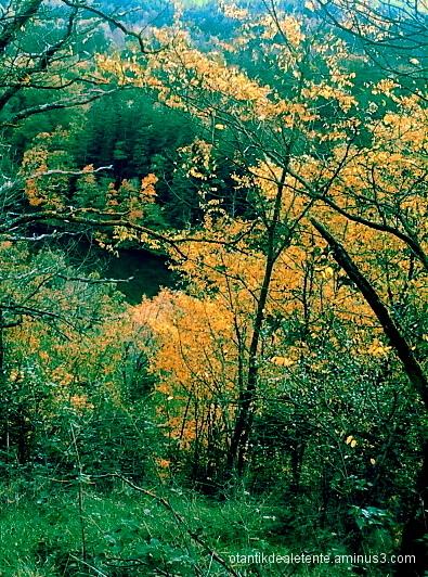 les premières flammes de l'automne
