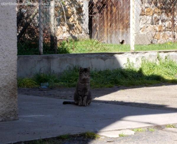 chat minerve...pas du tout