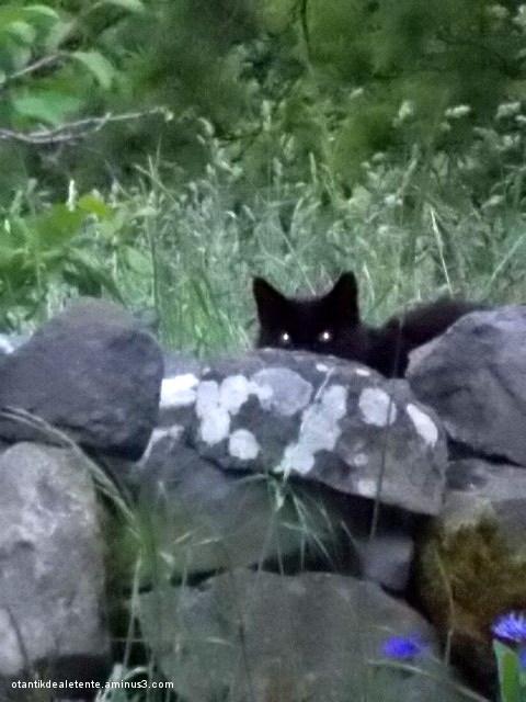 chats curieux 2/3