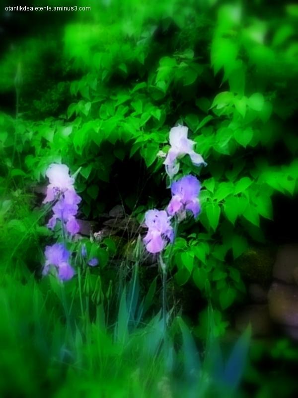 l'iris brille de cette couleur