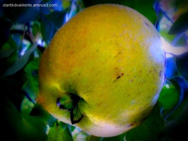 une série de fruits
