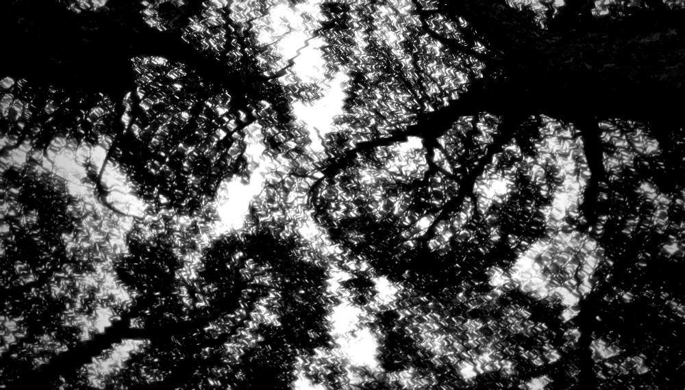 Crack willow garden