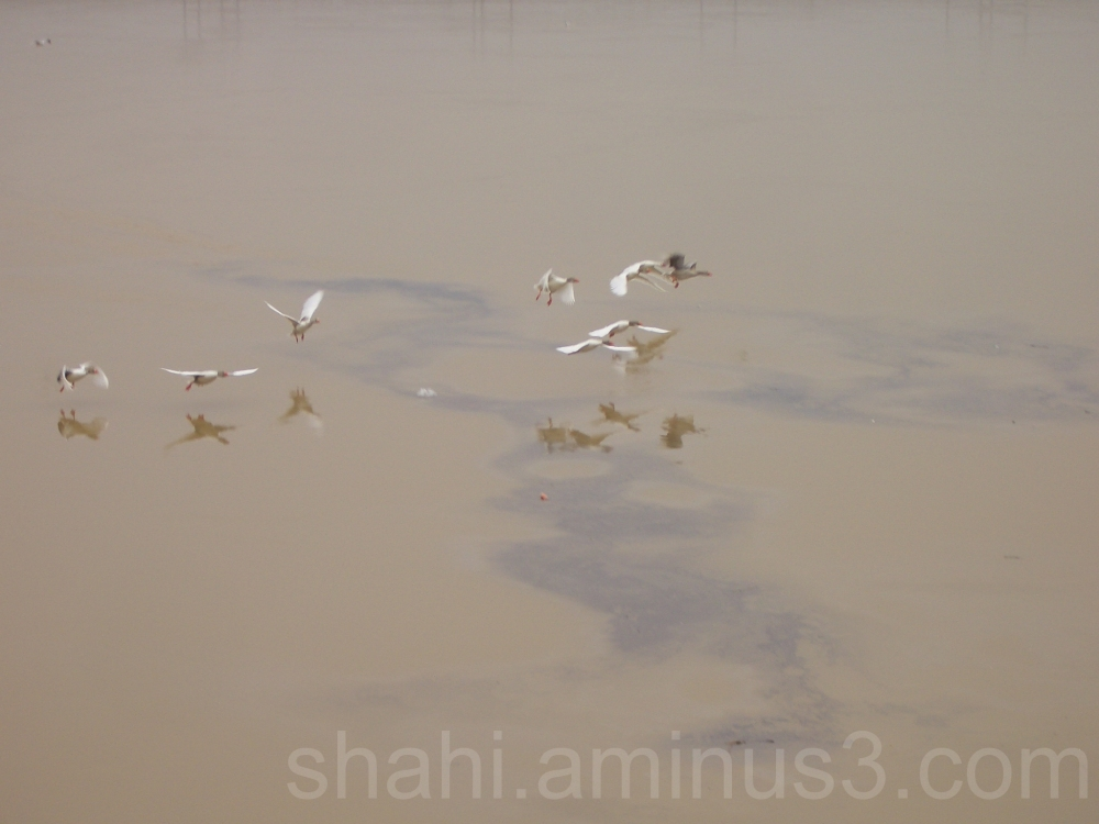 Birds fly over the river